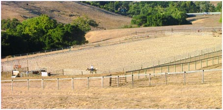 Central Coast Horse Boarding and Training riding arenas in San Luis Obispo CA