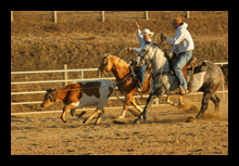 Roping and cattle available